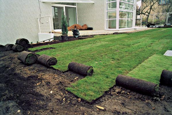 Ako vypestovať pekný zelený koberec (2. časť – Zakladanie)
