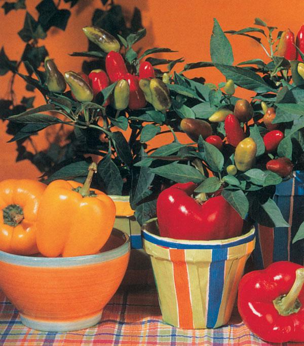 Exotické plody v byte
