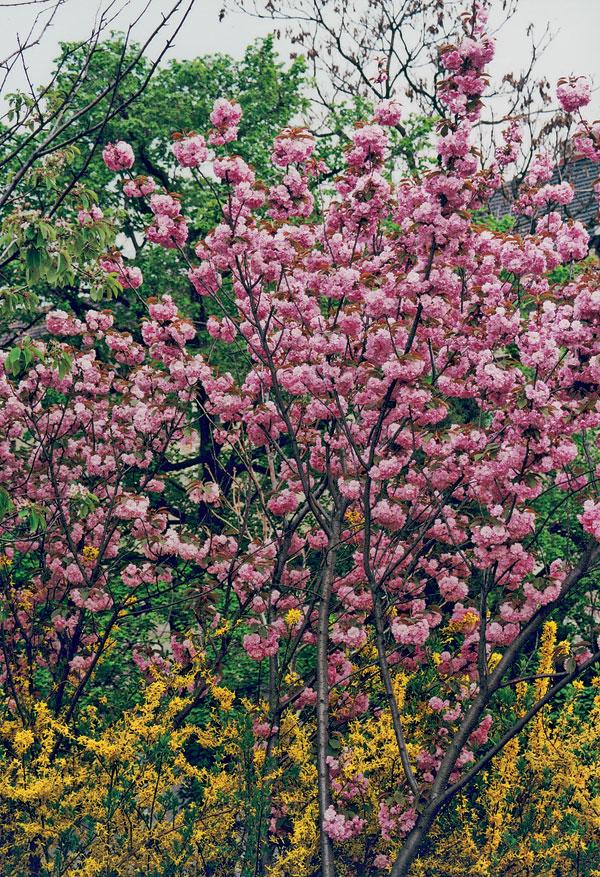 Jarná prehliadka farieb