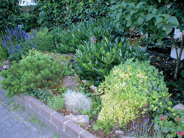 Vždyzelená záhradka