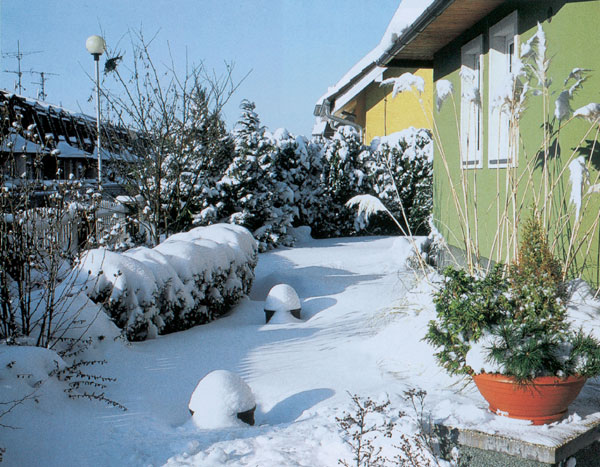Záhrada v zimnom období 1