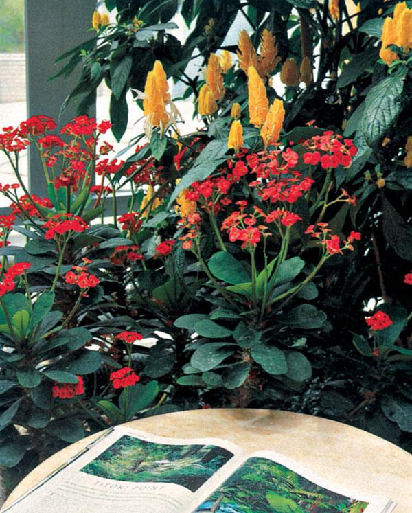 Pôvab zimných záhrad