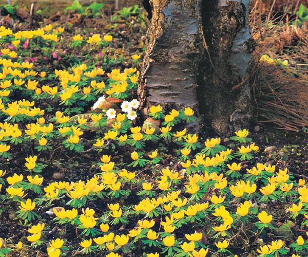 Jarní nedočkavci