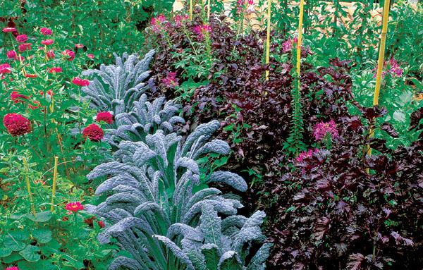 Moderná zeleninová záhrada alebo záhrada pre labužníkov