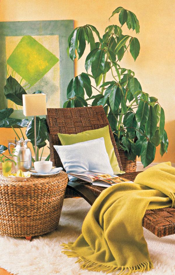 Zeleň v obývacej izbe