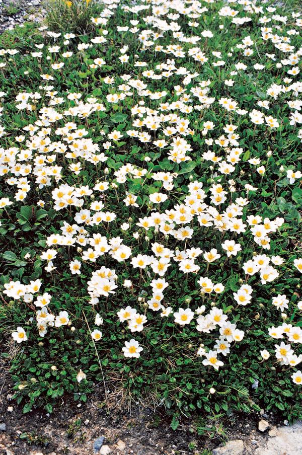 Kvetinové koberce