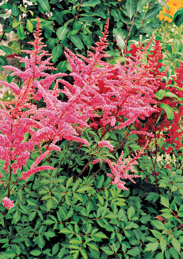 Rastliny pre krásne vresovisko
