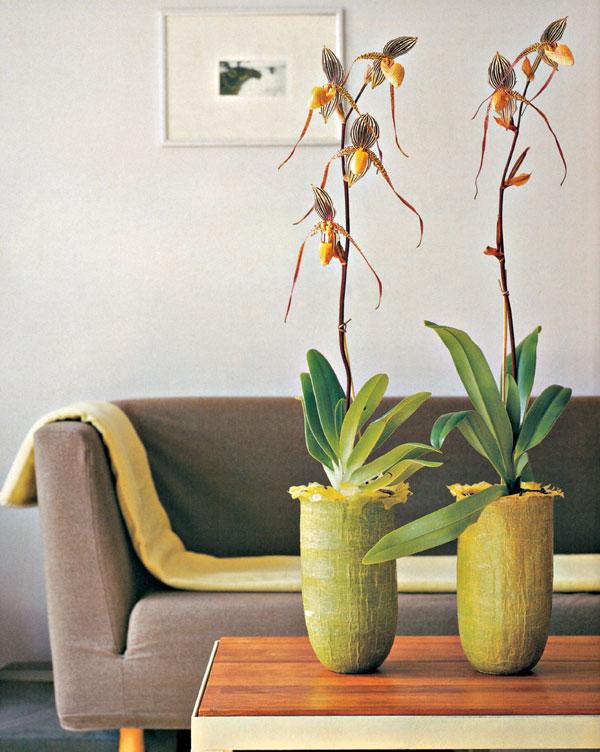 Exotické krásky v byte
