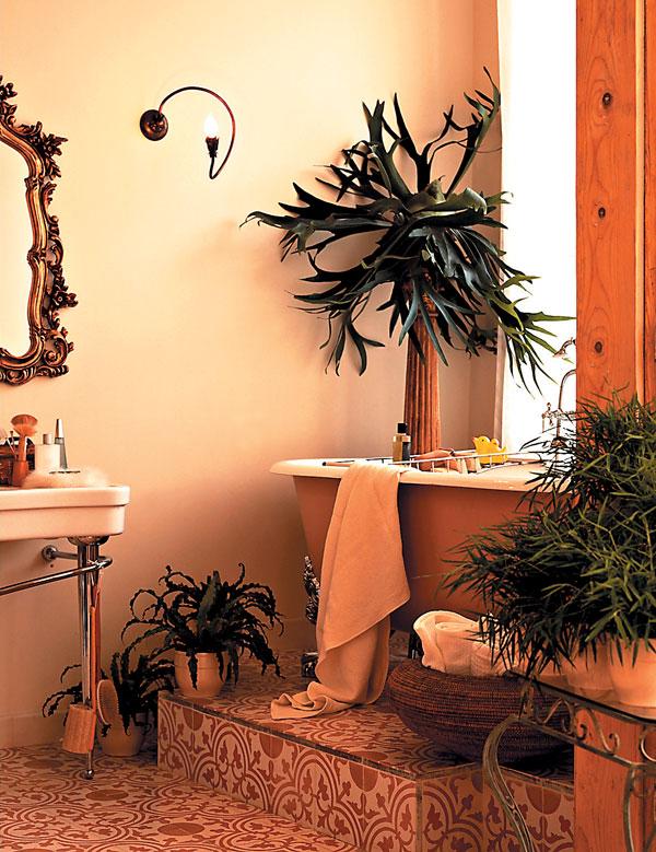 Rastliny v kuchyni a kúpeľni