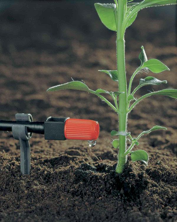 Polievanie vegetácie