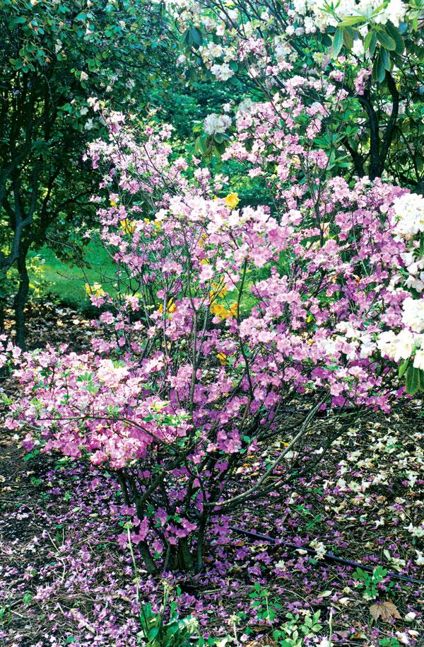 Záhrada na kyslej a vlhkej pôde