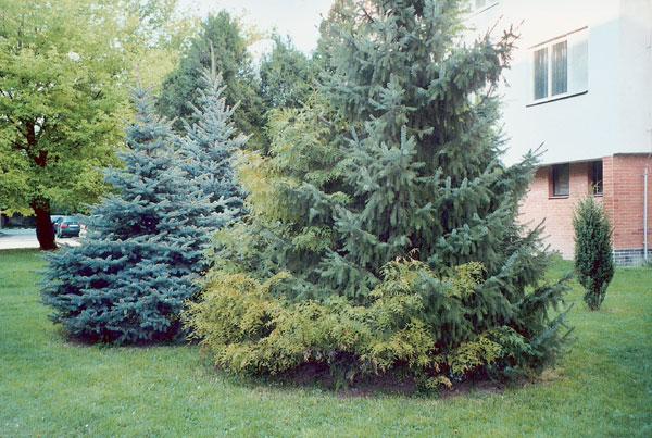 Koncepcia zelene v záhrade
