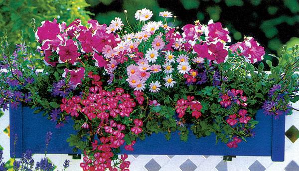 Záhrada na balkóne alebo niečo pre záhradníkov bez záhrad