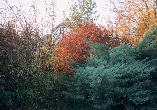 Farebnosť drevín