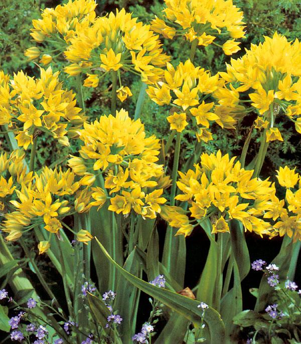 Kvetinová záhrada na balkóne: (2. časť)