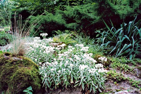 Záhrada pre všetky zmysly: alebo tajomstvo na každom kroku