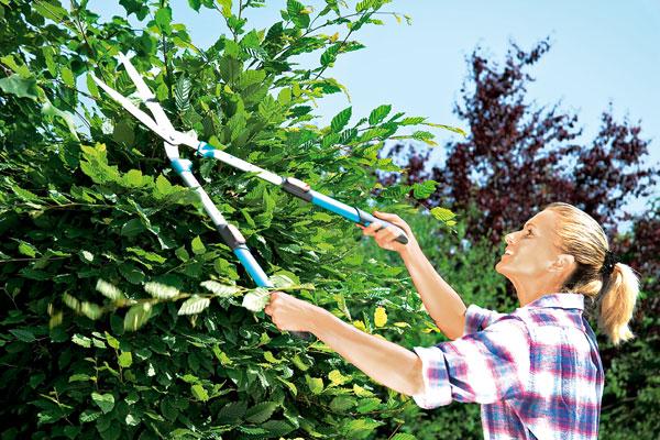 Záhradní kaderníci v akcii
