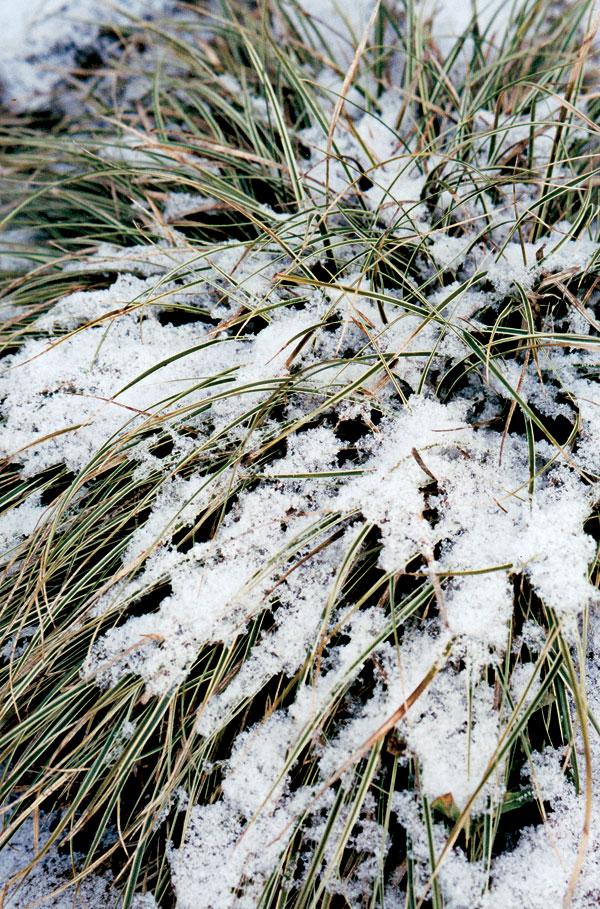 Záhrada v zime alebo Mrazivé pôvaby