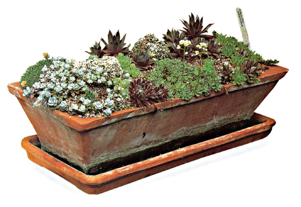 Vytvorte si oázu uprostred panelovej púšte