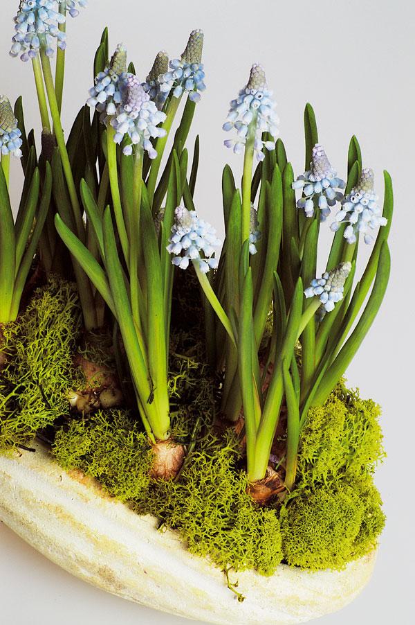 Aj modrá patrí k jari