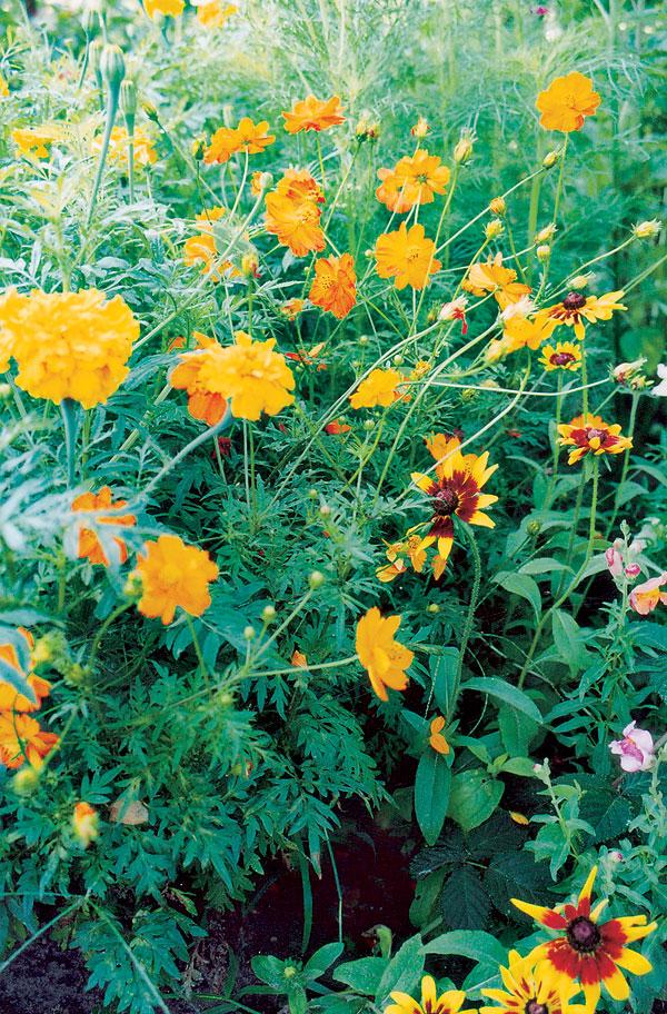 Jún v záhrade