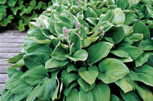 Rastliny na severnom balkóne