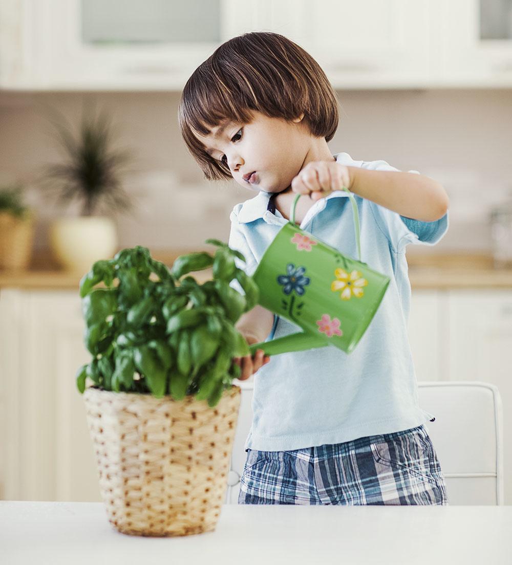 zalievanie izbových rastlín