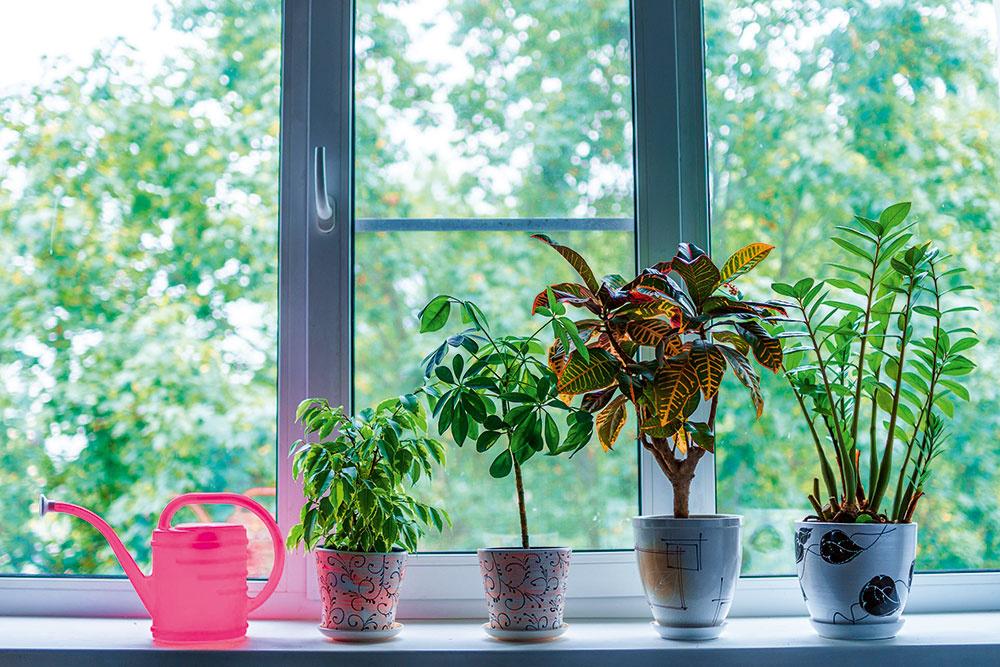Na jeseň a na zimu presuňte izbovky bližšie k oknu