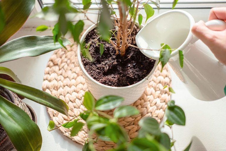 Viete, ako správne zalievať izbové rastliny? Pozor na tieto chyby!