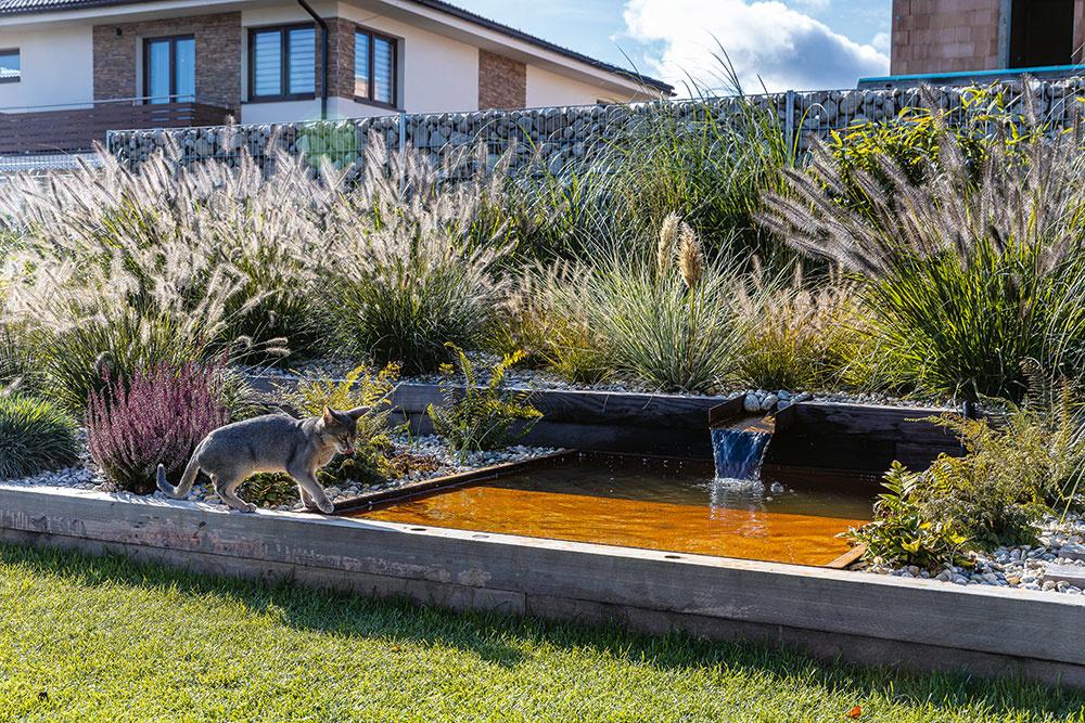Okrasné trávy v záhrade