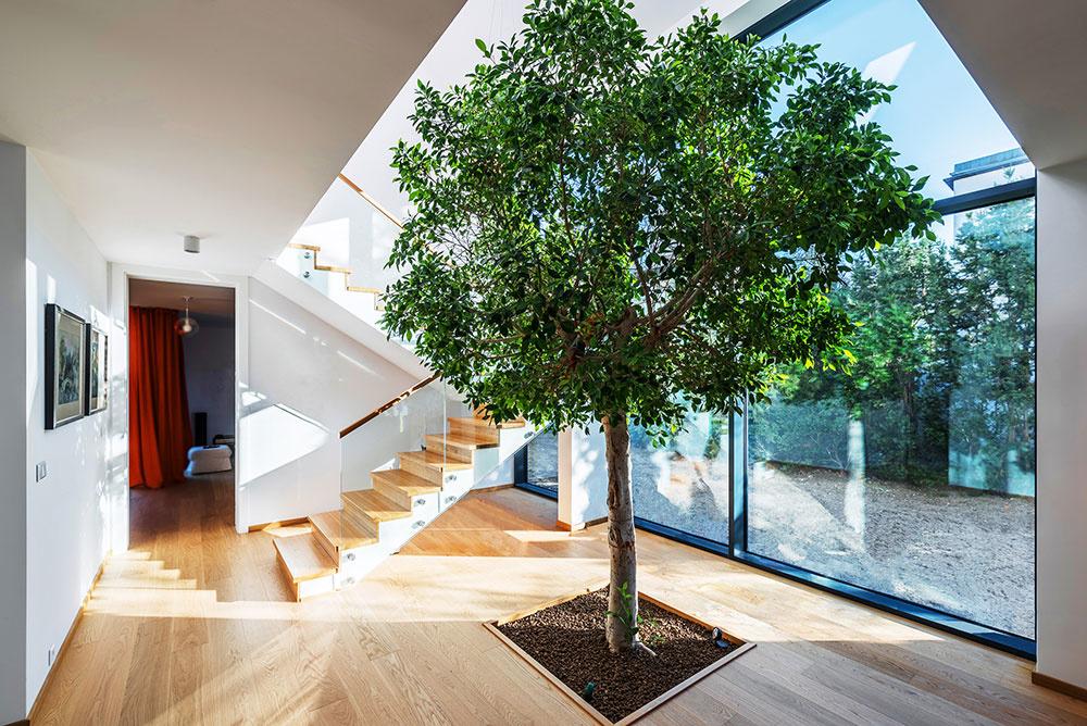 živý strom uprostred domu