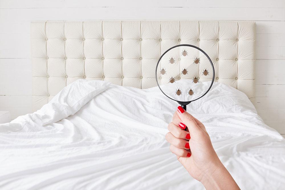 Ako odstrániť množstvo mikroorganizmov z našej postele a zabrániť ich tvorbe?