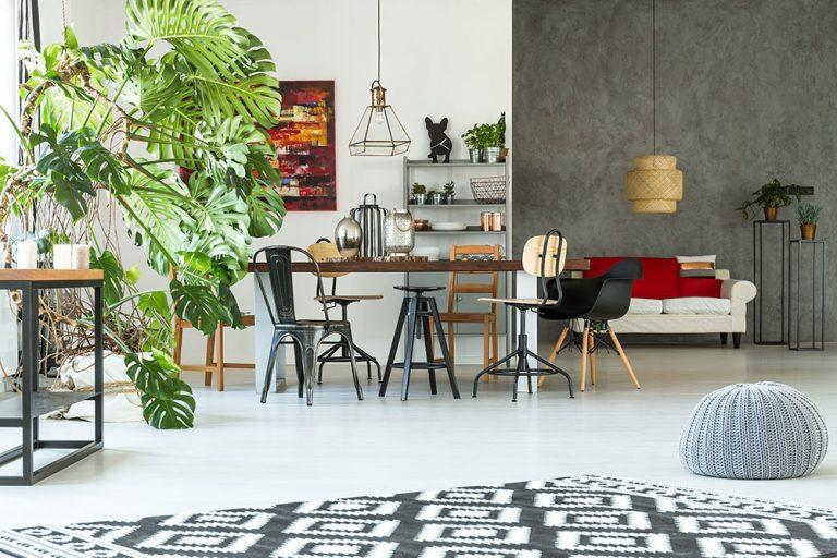 3 obľúbené interiérové rastliny, ktoré vás môžu dostať do nemocnice