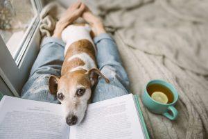 12 kníh, ktoré ste si chceli vždy prečítať