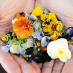 kvety v dlaniach
