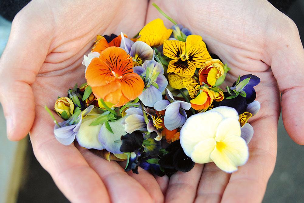 jedlé kvety v dlaniach
