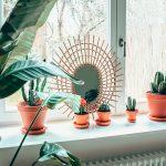 kaktusy na parapete