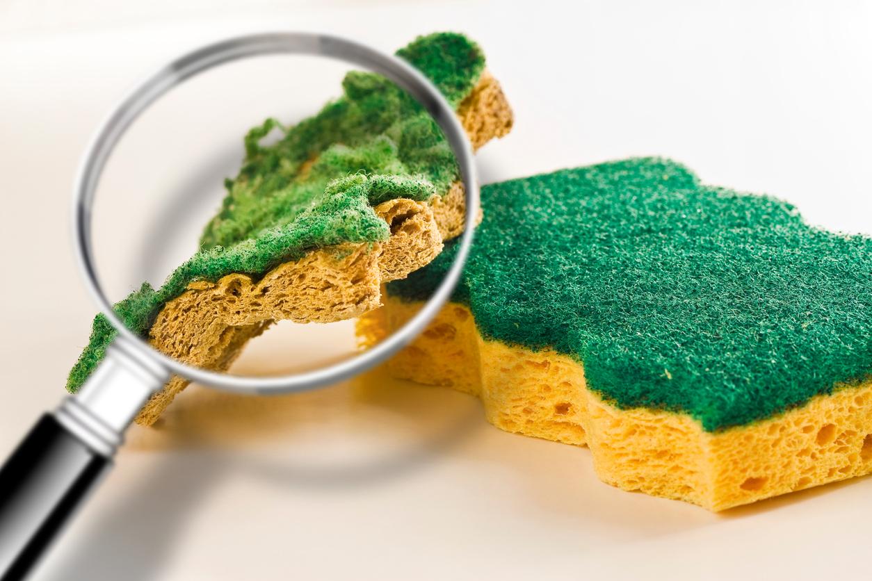 baktérie v kuchynskej hubke