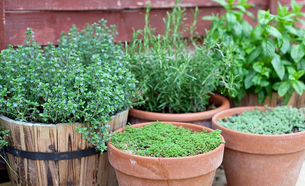 Vypestujte si doma či na balkóne vlastné bylinky
