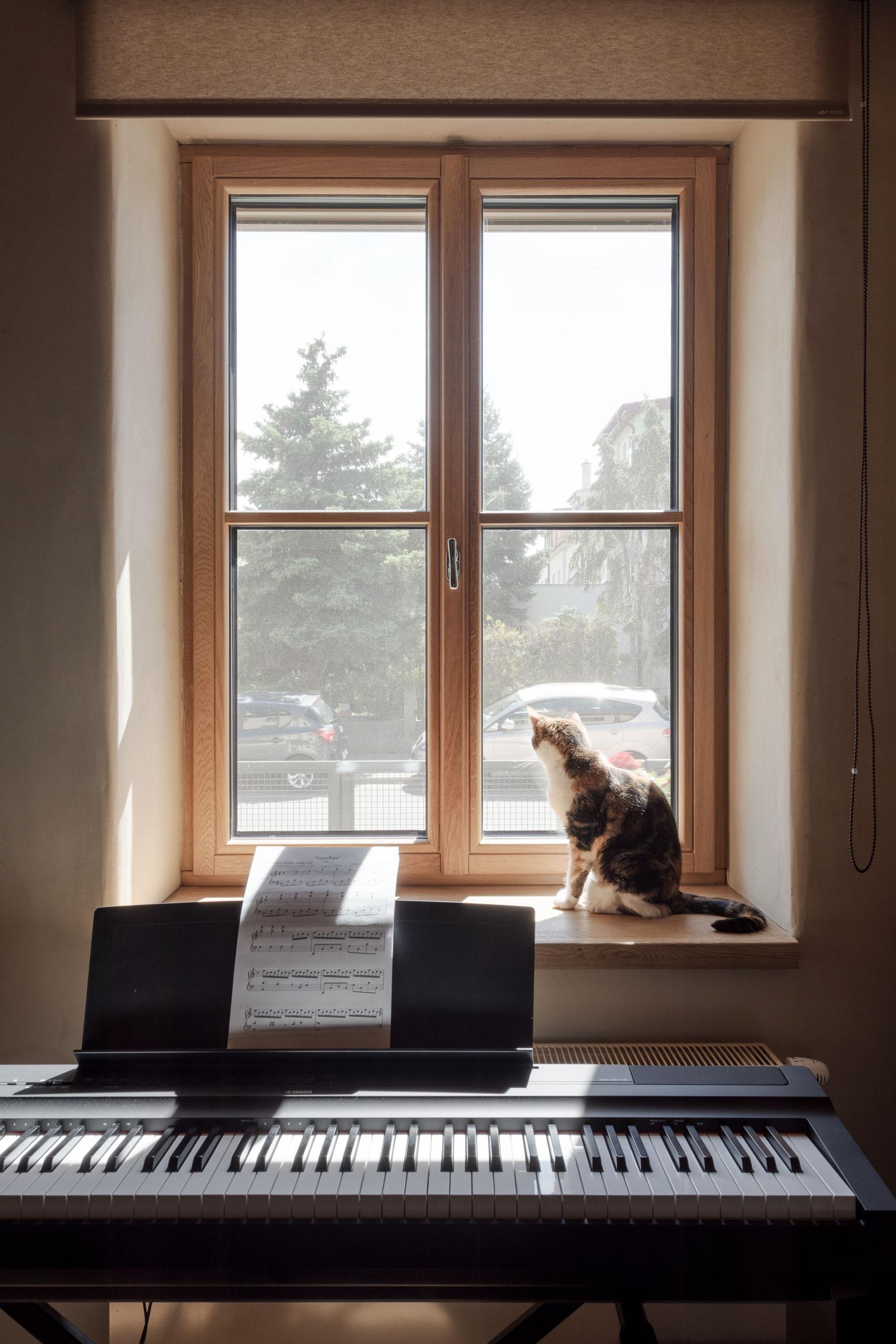 mačka na okennom parapete