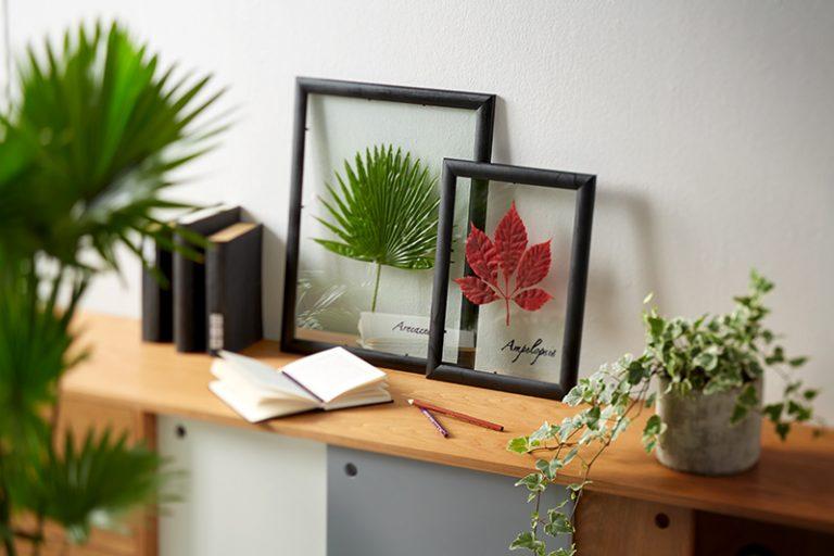 Ako si vyrobiť herbár v obrazovom ráme