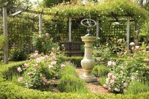 Ako si vypestovať krásne ruže