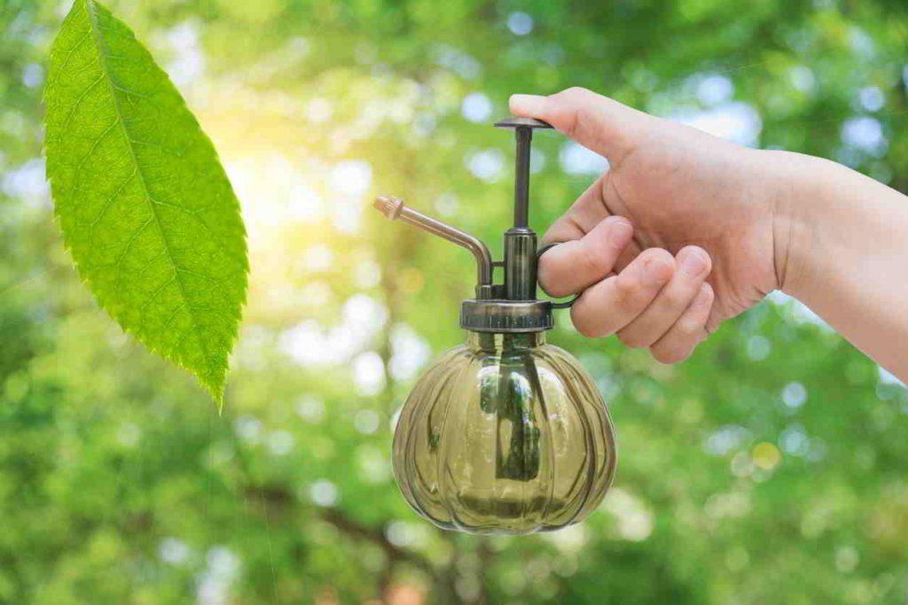 7 tipov proti škodcom v záhrade bez chémie