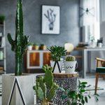 Kaktusy v interiéri