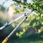 strihanie stromov na jeseň
