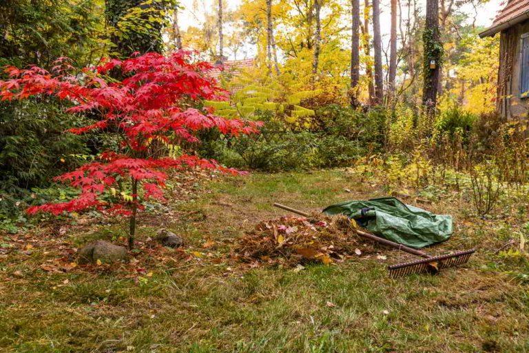Čo by ste mali ešte stihnúť na jeseň v záhrade?