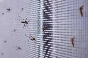 Jesenná údržba okien: Viete, ako najlepšie vyčistíte sieťky proti hmyzu?