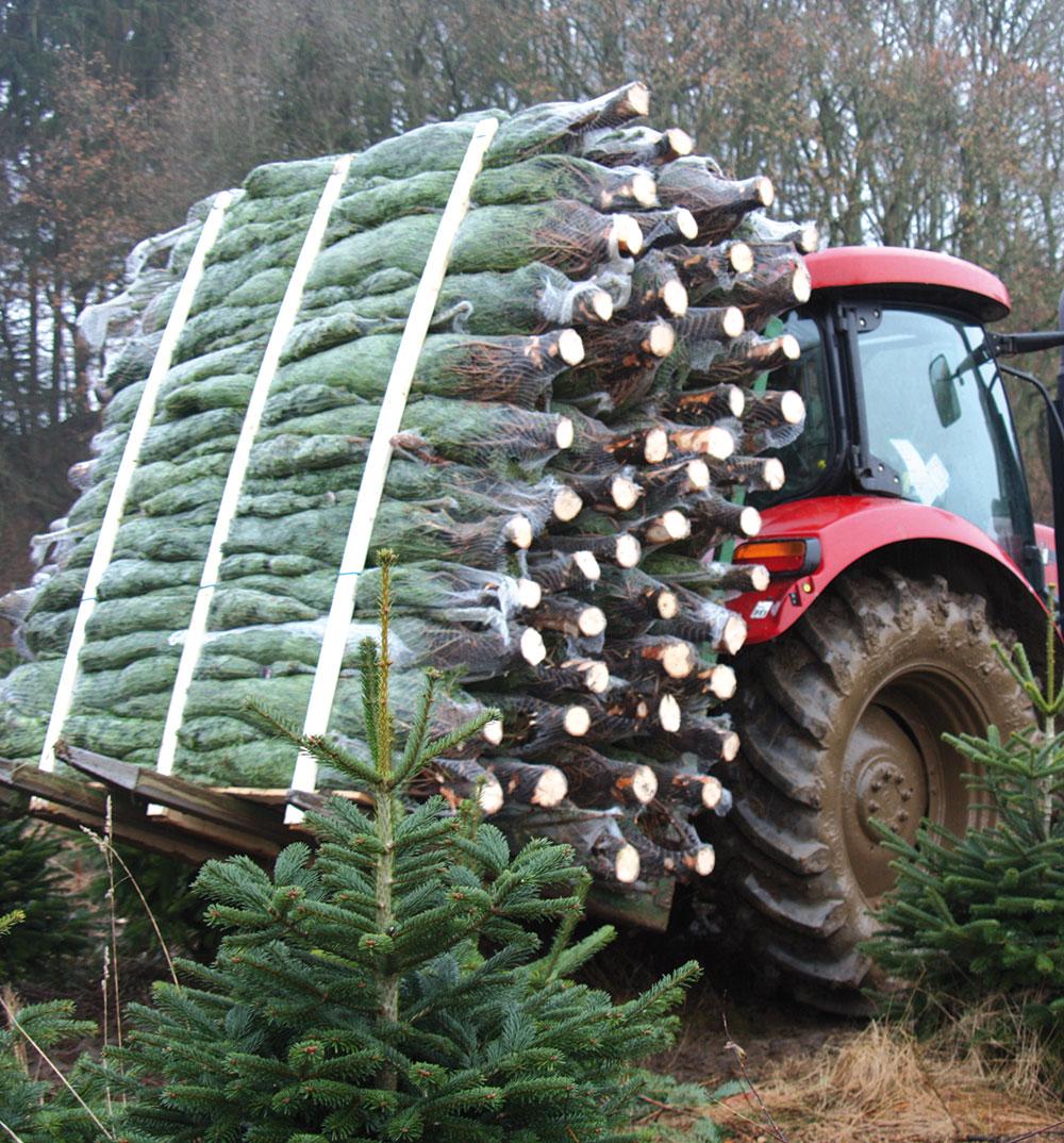 dovoz stromčekov