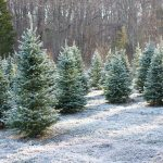 Vianocny-stromcek