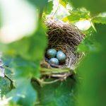 Hniezdo s vajíčkami